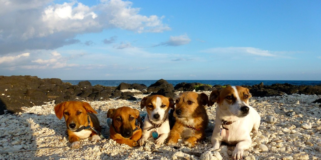 These well disciplined Jack Russell Terrorists were all tamed by subscribing to ShrinkThink's Brain  Behavior Newsletter.